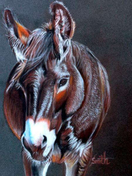 Dreamy Donkey