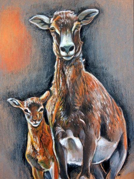 Mouflon and Son