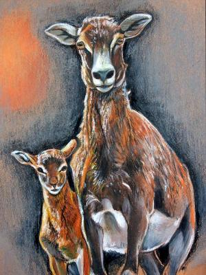 Mouflon and Son