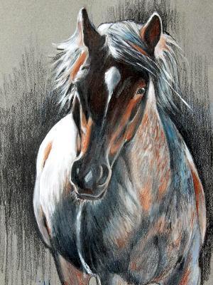 Mustang Roan II