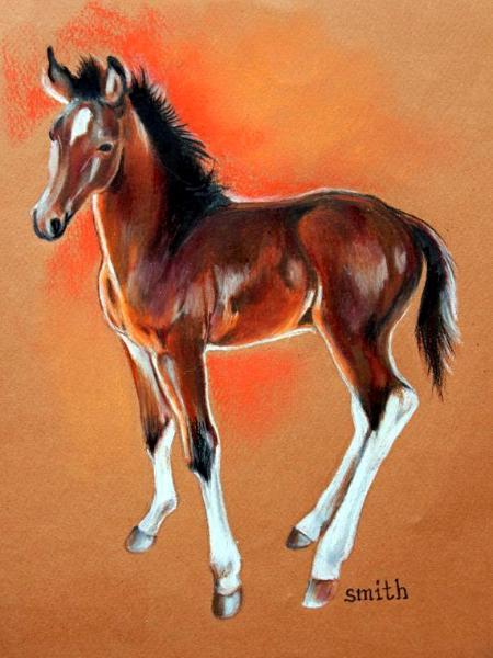 Circle K Foal